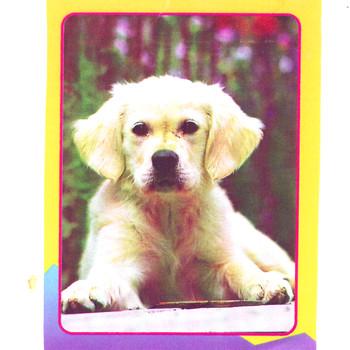 Cachorro - UN CACHORRO Y SUS CANCIONES