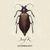 Josef K - Entomology