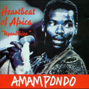 Amampondo - HEARTBEAT OF AFRICA Uyandibiza