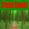 Crickets - Cricket Sounds