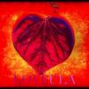 Love - Loveula