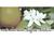 - Orange Blossom Special: Bluegrass Greats, Vol. 1