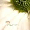 RMB - Evolution