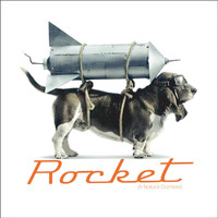 Braund Reynolds - Rocket (A Natural Gambler)