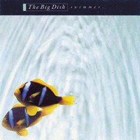 The Big Dish - Swimmer