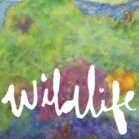Headlights - Wildlife