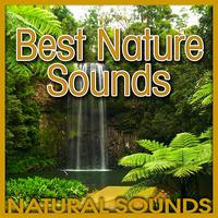 Natural Sounds - Best Nature Sounds (Nature Sound)