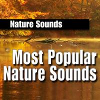 Nature Sounds - Most Popular Nature Sounds