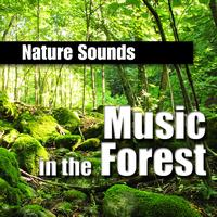Nature Sounds - Music in the Forest (Music and Nature Sound)