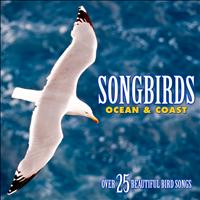Echoes of Nature: Bird Songs, Calls & Sounds - Songbirds: Ocean & Coast - Over 25 Beautiful Bird Songs & Sounds