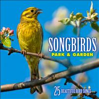 Echoes of Nature: Bird Songs, Calls & Sounds - Songbirds: Park & Garden - Over 25 Beautiful Bird Songs & Sounds