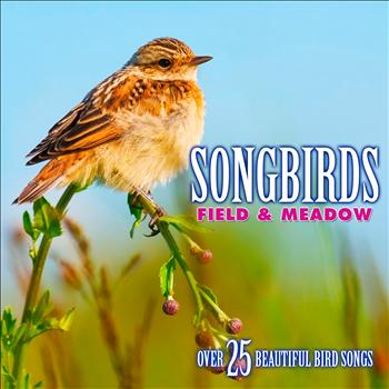 Echoes of Nature: Bird Songs, Calls & Sounds - Songbirds: Field & Meadow - Over 25 Beautiful Bird Songs & Sounds