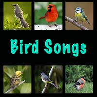Birds - Bird Songs