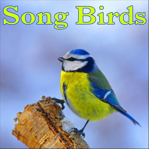 Birds Nature Sounds Mp Free Download