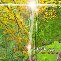 Colours - Colours of the Forest