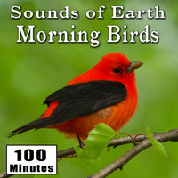 Nature Sounds - Sounds of Earth: Morning Birds