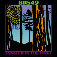 BR549 - Tangled in the Pines