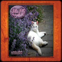 Harlequins Enigma - Catmint