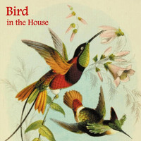 Paul Alan Hertel - Bird in the House