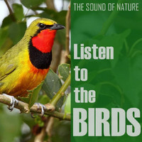 The Birds - Listen to the Birds