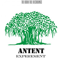 Antent - Experement