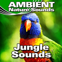 Ambient Nature Sounds - Jungle Sounds