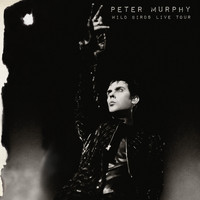 Peter Murphy - Wild Birds Live Tour