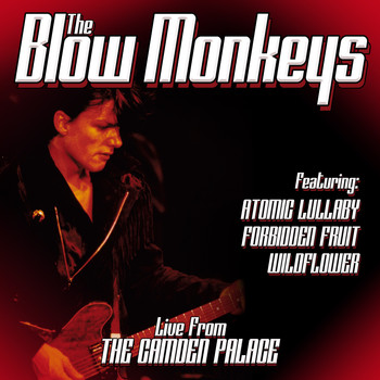 The Blow Monkeys - Live From London