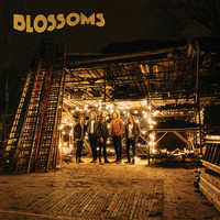 Blossoms - Honey Sweet