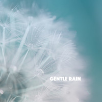 Rain Sounds Nature Collection, Rain Sounds Sleep and Ocean Sounds Collection - Gentle Rain