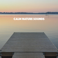 Rain Sounds, White Noise Therapy and Sleep Sounds of Nature - Calm Nature Sounds