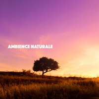 Rain, Ocean Sounds and Rainfall - Ambience Naturale