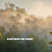 Rain Sounds, White Noise Therapy and Sleep Sounds of Nature - Rain from the Forest