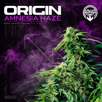 Origin - Amnesia Haze