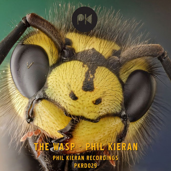 Phil Kieran - The Wasp