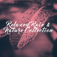 Rest & Relax Nature Sounds Artists, Sounds of Nature Relaxation and Sleep Sounds of Nature - Relaxed Rain & Nature Collection