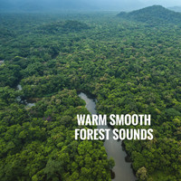 Rain Sounds Nature Collection, Rain Sounds Sleep and Ocean Sounds Collection - Warm Smooth Forest Sounds