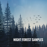 Rain Sounds, White Noise Therapy and Sleep Sounds of Nature - Night Forest Samples