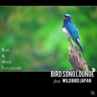 Bird Song Lounge Feat. Wild Bird Japan - Blue & White Flycatcher