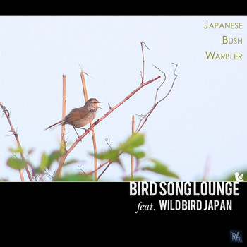 Bird Song Lounge Feat. Wild Bird Japan - Japanese Bush Warbler