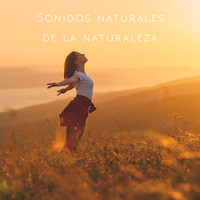 Nature Sounds, Rain Sounds and Rain - Sonidos naturales de la naturaleza