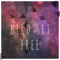 Northern Lights - Bird Set Free