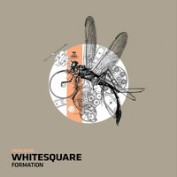 Whitesquare - Formation