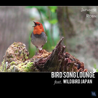 Bird Song Lounge Feat. Wild Bird Japan - Japanese Robin