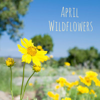 Nature Sounds - April Wildflowers