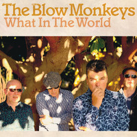 The Blow Monkeys - What In The World