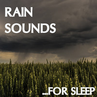 Rain Sounds, Meditation Music Zone, Nature Sounds Nature Music - 19 Rain Sounds: Sleep Better with Rain Sounds (Loopable)