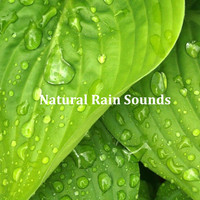 Rain Sounds, Meditation Music Zone, Nature Sounds Nature Music - 16 Ambient Rain Sounds: Natural Sounds for Stress Relief, Sleep, Anxiety and Wellbeing
