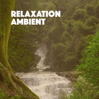 Rain Sounds & White Noise, Meditation Rain Sounds and Rain - Relaxation Ambient
