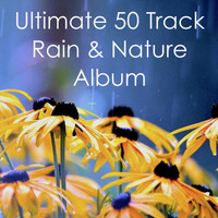 Rain Sounds, Rain Sounds & Nature Sounds, Nature Sounds Nature Music - Ultimate 50 Track Rain & Nature Album
